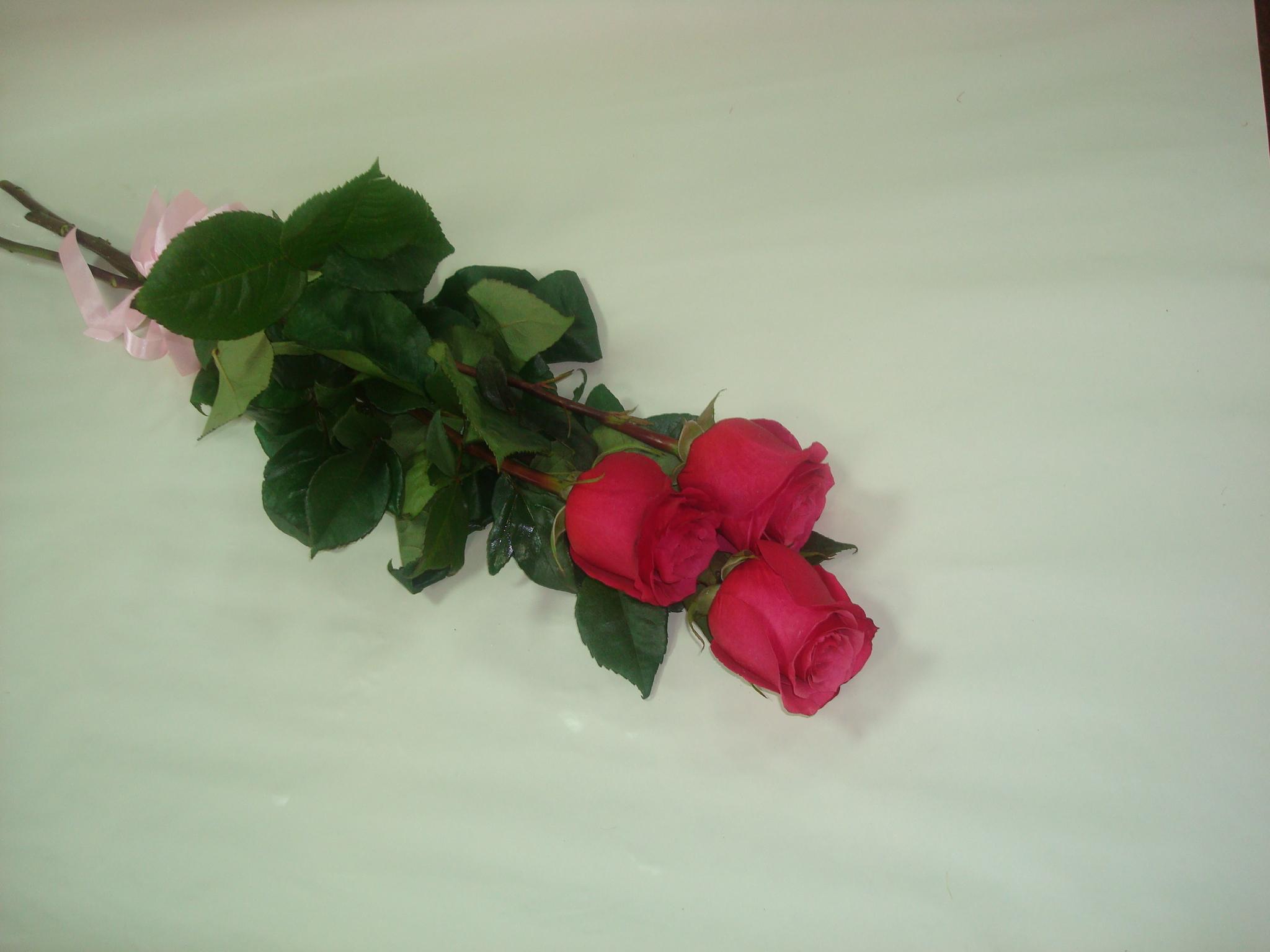 Фото цветов 3 розы